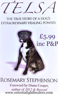 Telsa the healing dog